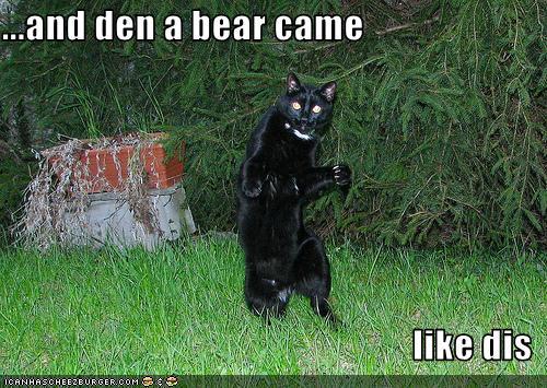 catbear.jpg